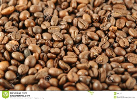 Coffee Bean Gift Card Free Drink - coffee beans royalty free stock photography image 991977