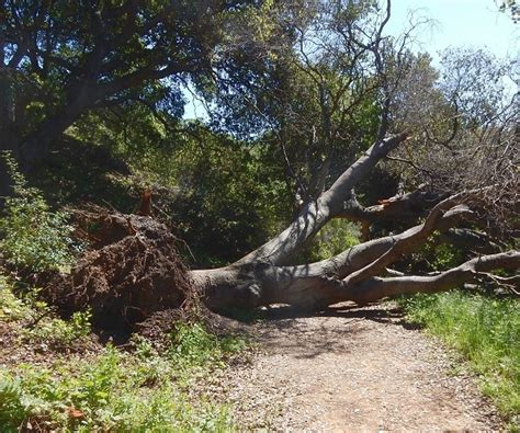 home insurance and fallen trees fallen tree www pixshark com images galleries with a bite