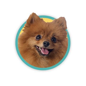 gifts for pomeranian gift ideas for owners and owner gifts