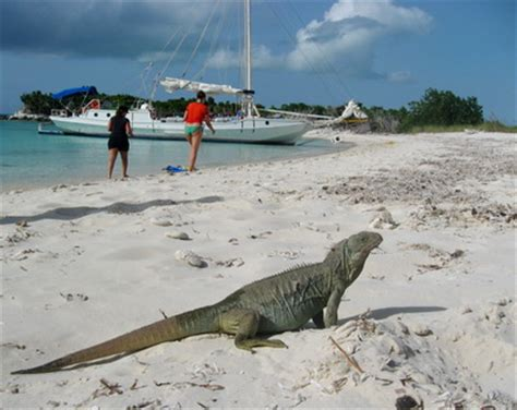 iguana island little water cay iguana island turks and caicos