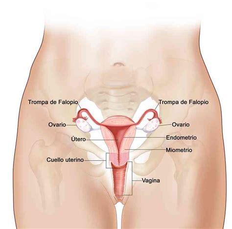 libro el perine femenino y partes del aparato reproductor femenino