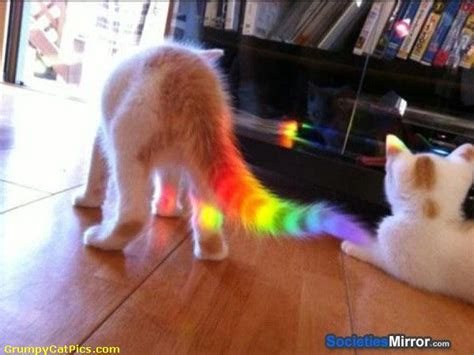 Cat Rainbow Meme - very cute kitty with a rainbow in its tail kitty cat kittens see funny images photos