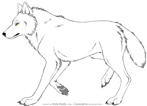 Dessin Loup Lallemand