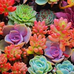 colorful cactus 25 best ideas about colorful succulents on