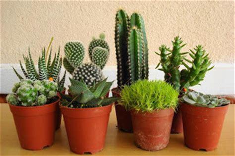 dfrinz blog  menanam kaktus