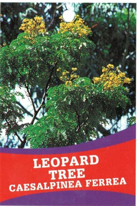 Nursery Books Online by Tag Leopard Tree Caesalphinea Ferrea