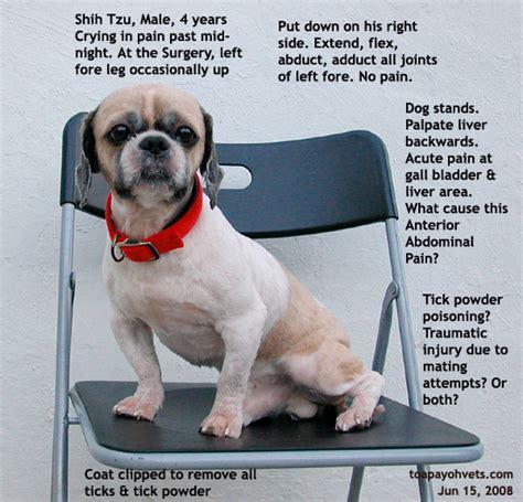 shih tzu bladder surgery 031001asingapore veterinary dystocia emergency caesarians schnauzer maltese fox