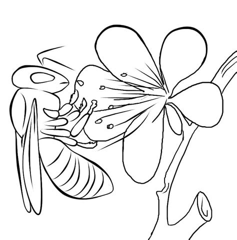 coloring pages bees flowers free printable bee coloring pages for kids