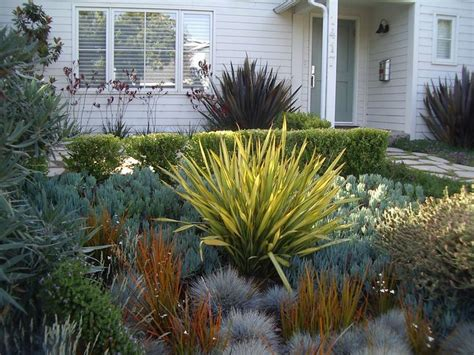 phormium japanese blood grass succulents garden pinterest grasses blood and succulents