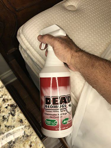 dead bed bugs contact killing bed bug spray safe  toxic  oz buy   uae lawn