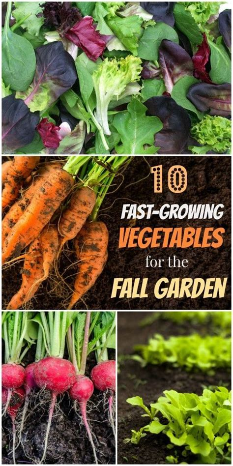 what do you plant in a fall garden 25 best ideas about fall planting vegetables on