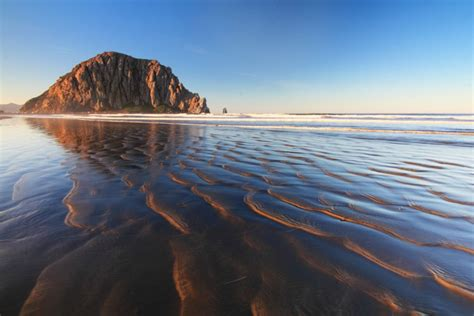 State Birds by Morro Rock California Usa Amazing Places
