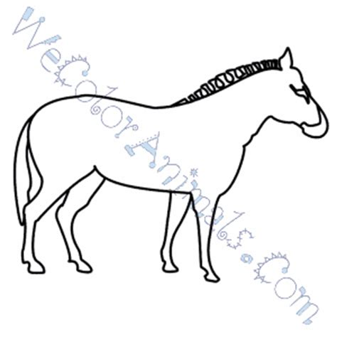 Stripeless Zebra Coloring Page | zebra coloring pages