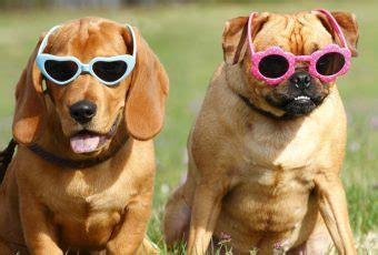 are all dogs color blind horizon times articles all the world