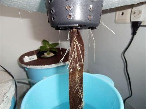 membuat hidroponik sistem wick hidroponik sistem sumbu atau wick sistemhidroponik