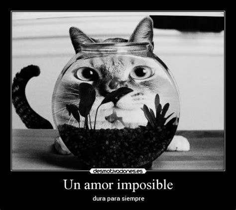 un amor imposible 843397985x un amor imposible desmotivaciones