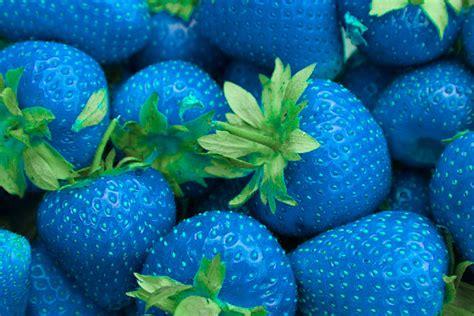 blue food percy jackson percy hades jackson percy jackson e os olimpianos percyjackson blue