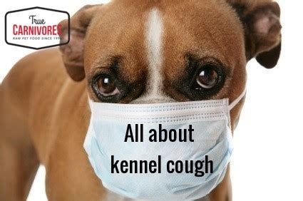 coughing in dogs uncategorized archives true carnivores
