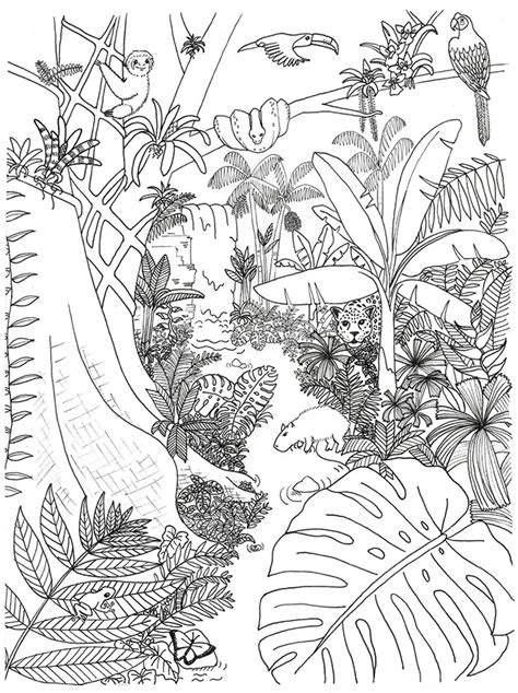 Rainforest Animals Coloring Pages by Rainforest Animals And Plants Coloring Page Rainforest