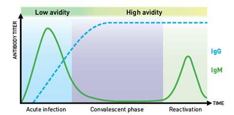 avidity test cmv mobitec human cytomegalovirus cmv assay kit from vida