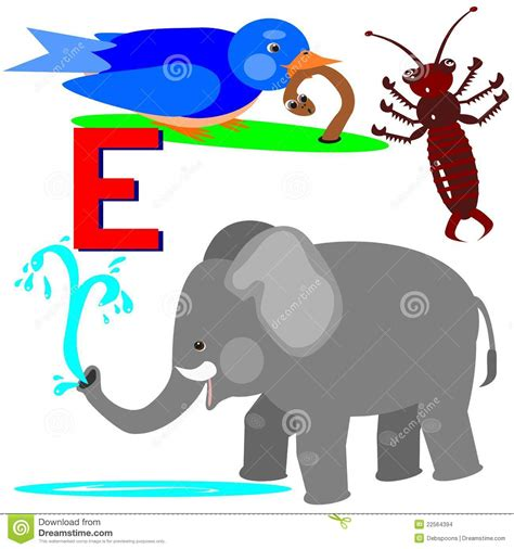 animals that start with the letter e e early bird earwig elephant stock vector image 22564394 1077