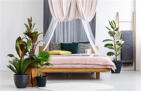 plantas  quarto quais ter  seus beneficios  sono