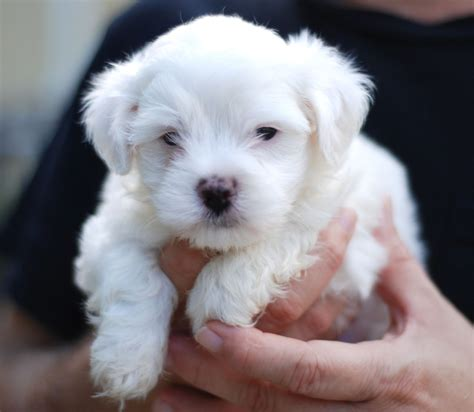 photos of puppies puppies pictures