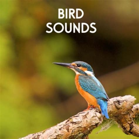 gentle birds and forest stream for relaxation meditation