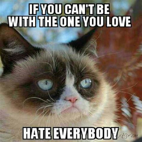 Grumpy Cat Love Meme - to make you laugh if you can t be with the one you love