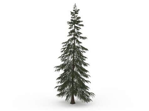 turkish fir tree turkish fir tree 3d model 3ds max files free
