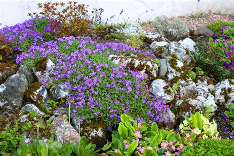 Flowers For Rock Gardens Plant And Garden Ideas For Your Home Home Designs