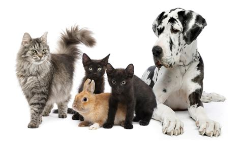 all pet dogs about us pet hospital in pacifica allcare veterinary hospital of pacifica