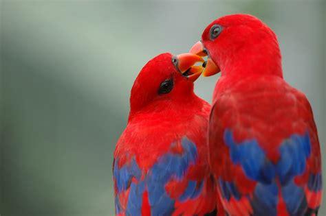 images of love birds hd cute love birds hd wallpaper