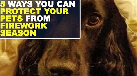 how to comfort dogs during fireworks how to comfort your pets on bonfire night if they re