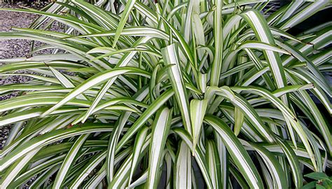 best plants for west side of house best indoor shade plants for low light rooms