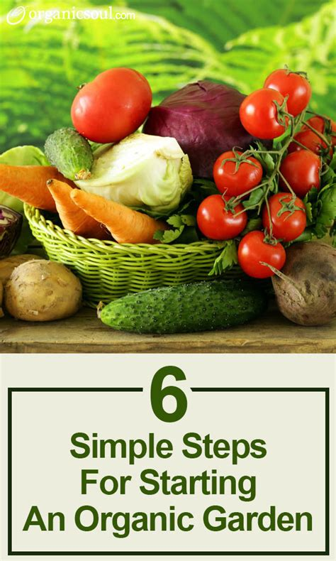 starting an organic vegetable garden six simple steps for starting an organic garden