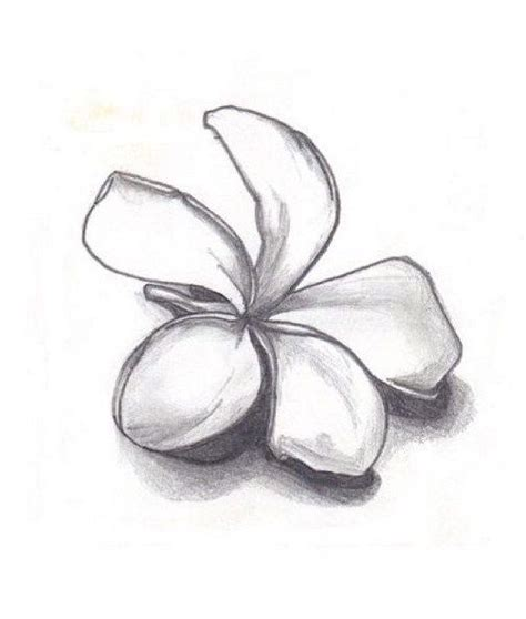 small plumeria tattoo flowers for gt plumeria flower drawing black and white
