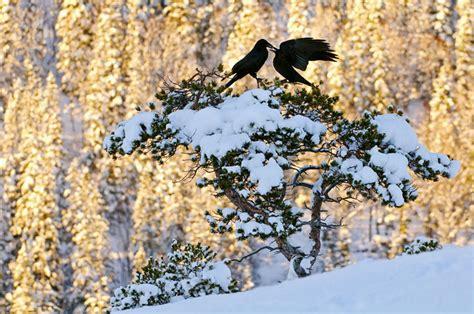 preguntas directas aleman fotos espectaculares de la naturaleza descargar gratis