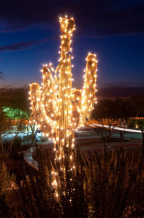 saguaro cactus christmas trees arizona tree photograph by jacek joniec