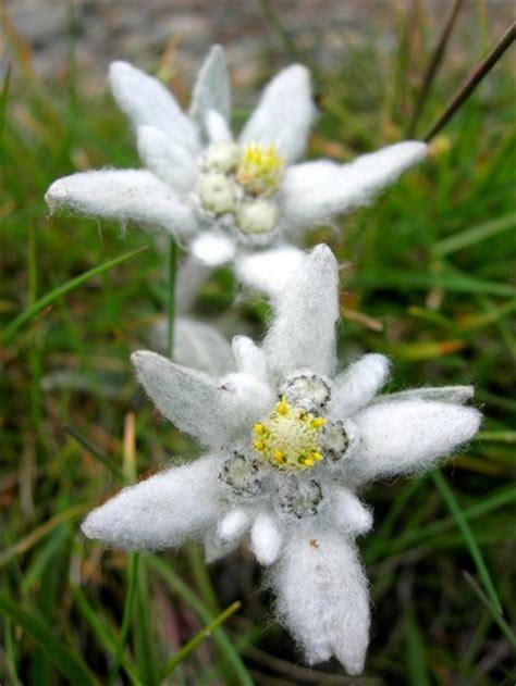 Stelan Next Flower nature inspired makeup national flowers series austria