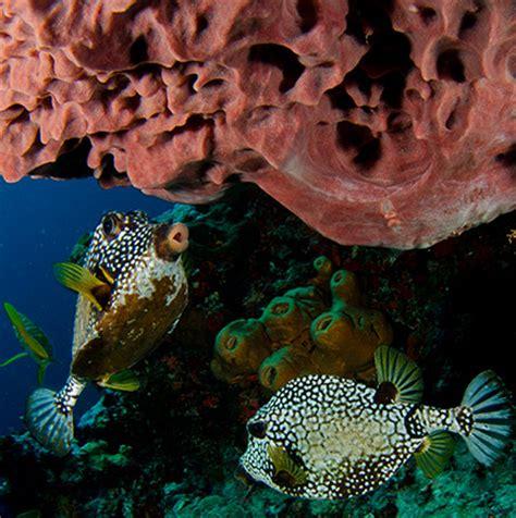 dive packages cancun diving package scuba diving cancun