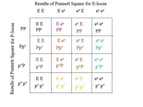 For the silver trait, the Punnett square is: F1 Generation Punnett Square