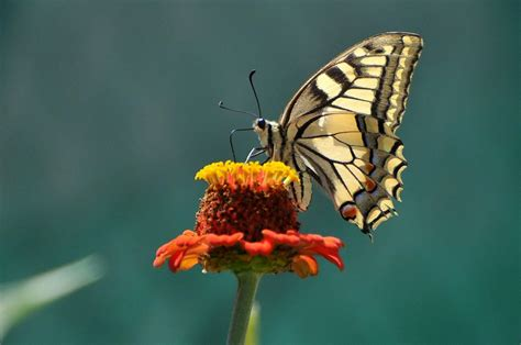 casa delle farfalle casa delle farfalle co
