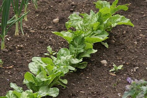 Life Lessons From Ants Rachel Britton Ant In Vegetable Garden
