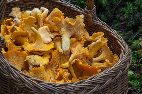 manfaat jamur bagi tubuh beserta risikonya