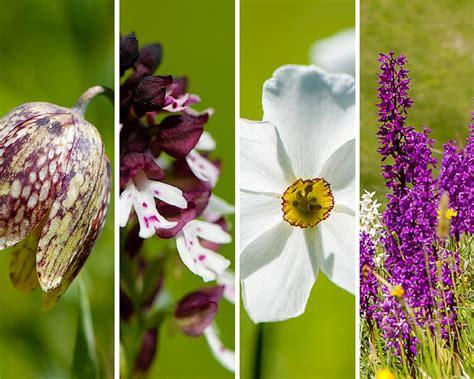 montagna dei fiori montagna dei fiori fioritura spontanea e paesaggi
