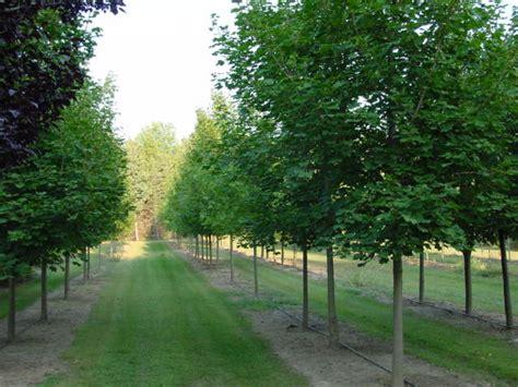 tree photos elling tree farm