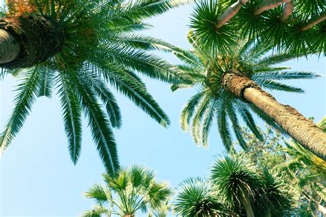 Palm Country Detox by 2014 Roundup Of California Real Estate Headlines