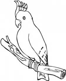 Cockatoo Parrot Coloring Page  Download &amp Print Online Pages sketch template