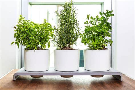watering herb pots herb pots
